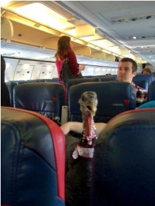 Turkey on Delta Flight copy