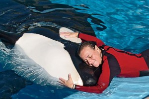 brancheau-with-orca_si - Dawn Brancheau with an orca December 2005 Photo Orlando Sentinel